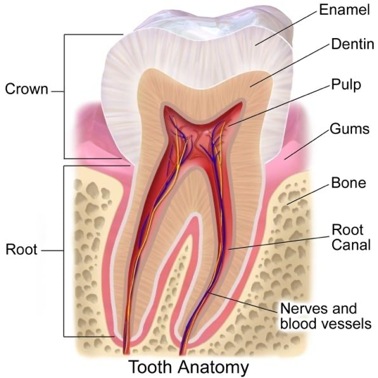 Do I need Cavity or Root Canal?